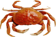 Crab Market Trends in China: JSBMarketResearch